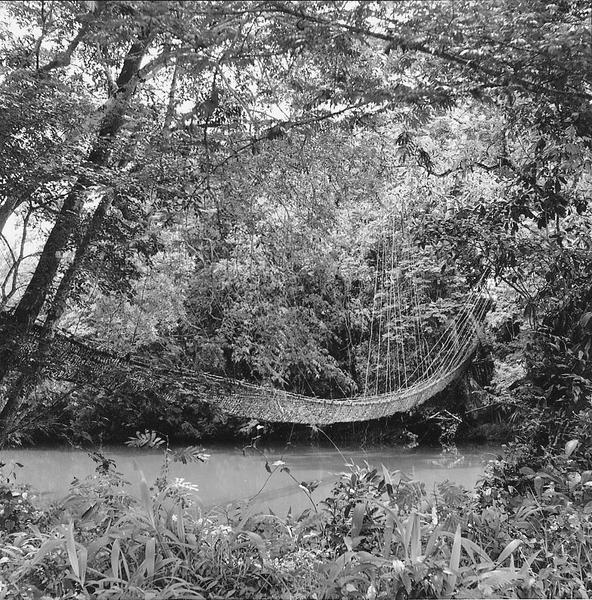 Vine Bridge, Guinea, 1953