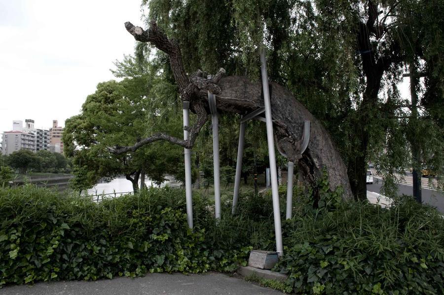 A-Bombed Willow Tree, Hiroshima, Japan, 2008