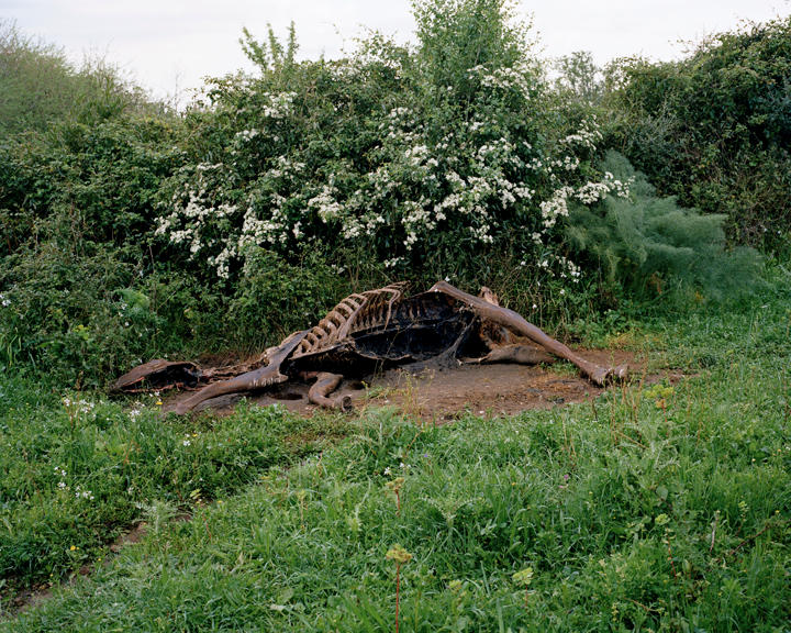 Dead Horse, 40 x 50 inches, c-print, 2011