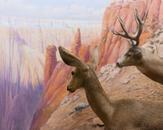 Grand Canyon National Park, Kaibab Plateau