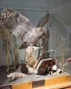 Nature's Silent Balance; Idaho Museum of Natural H