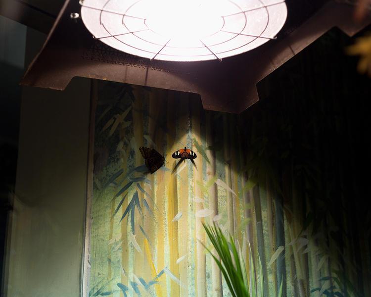 Doris Butterfly; Audubon Butterfly Garden and Inse
