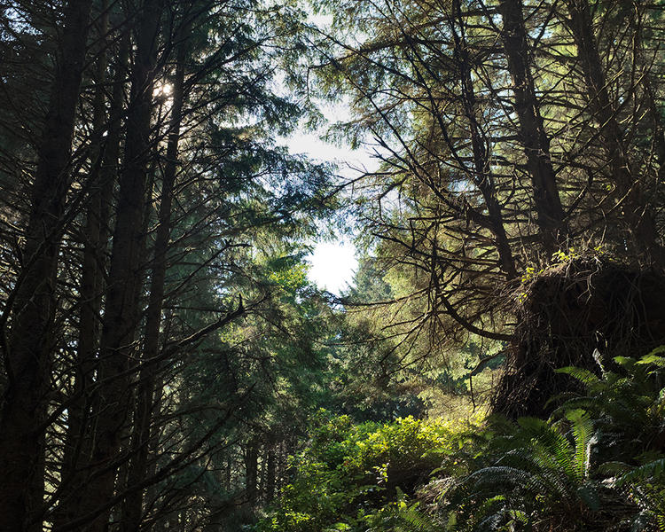 Crescent Beach Trail; Ecola State Park, OR