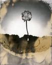 Thin Veils Volume II #10
