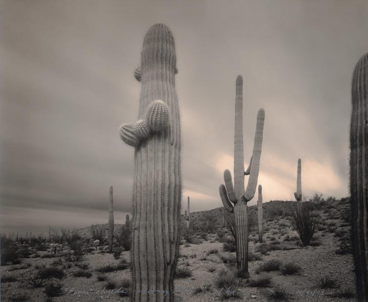 1 Hour Storm Saguaros