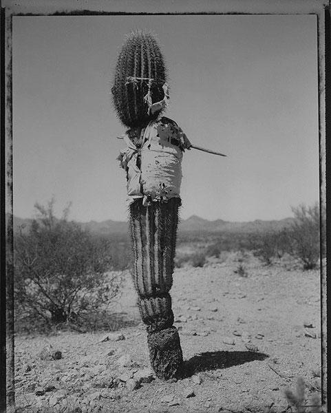 Saguro with Shirt, U.S. - Mexico Border