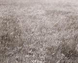 Christina's Meadow