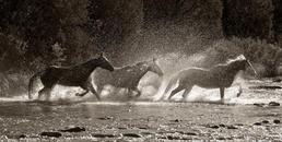 Hooves & Dust 35