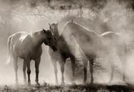 Hooves & Dust 40
