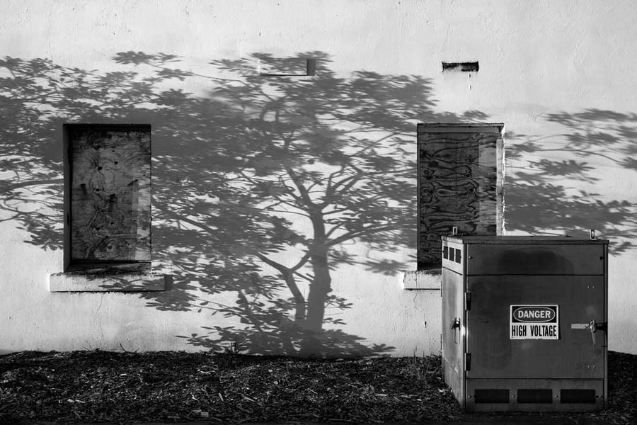 Tree Shadow at Thornberg