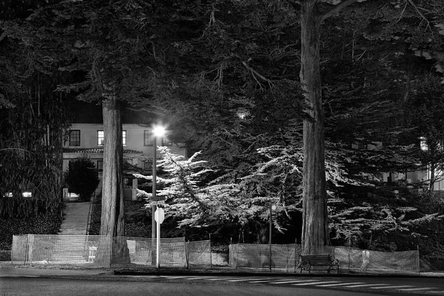 Trees Nos. 1001-1004