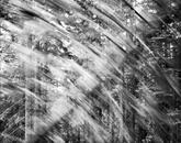 Falling Tree #4, Scotts Valley, CA 1987