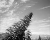 Falling Tree #3, Scotts Valley, CA 1987