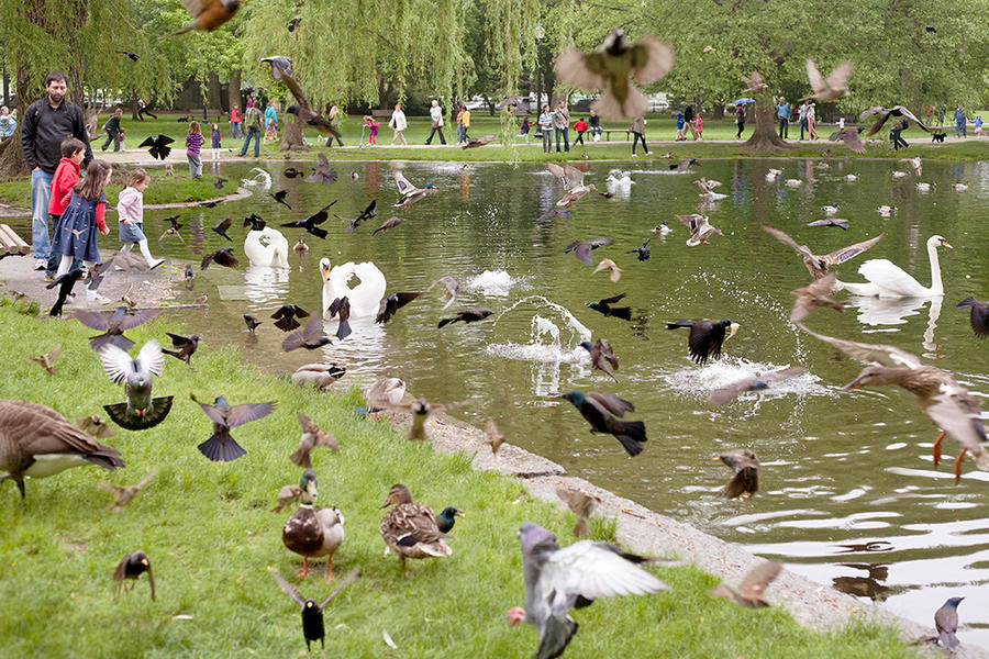 Birds, Boston Public Garden