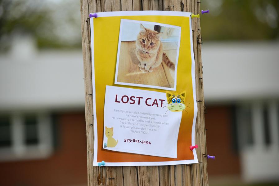 Lost Cat 2014
