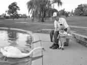 The swan, 9/98