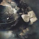 Bowl with Hydrangeas