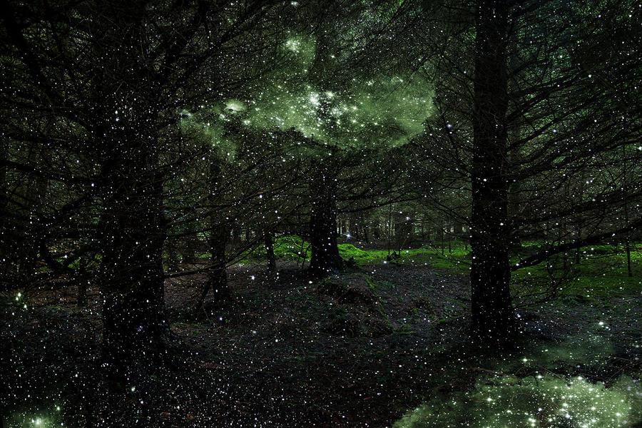 Stars 3, 2014
