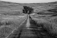 Tree Arch, Sand Hills, Nebraska