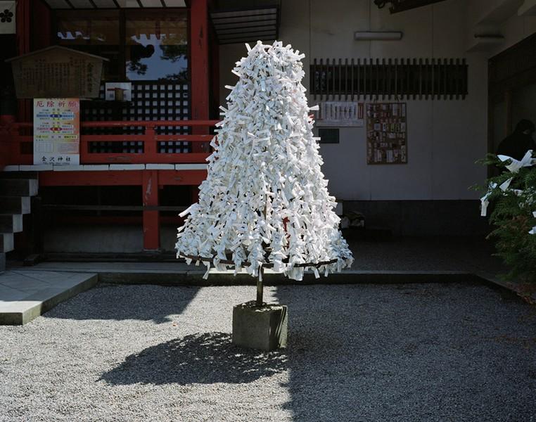 Omikuji (prayer tree)