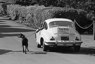 Walking the Dog, California, 1975
