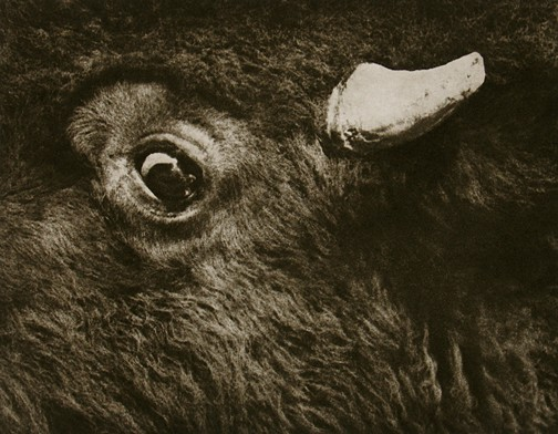 Fear, 1985/2007, copperplate gravure