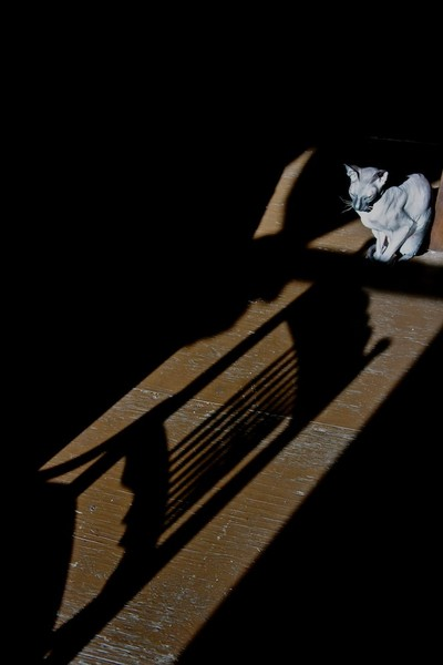 Cat in the Sun's Shadow, Window and Chair