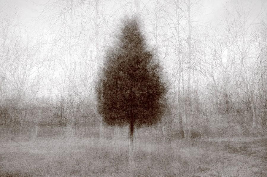 Higher Ground Cedar