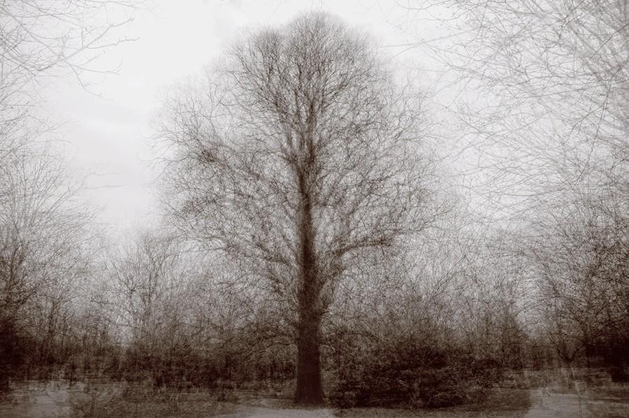 Spring Grove Elm