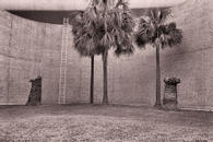 Palm Trees and Ladder, New Orleans, 1986