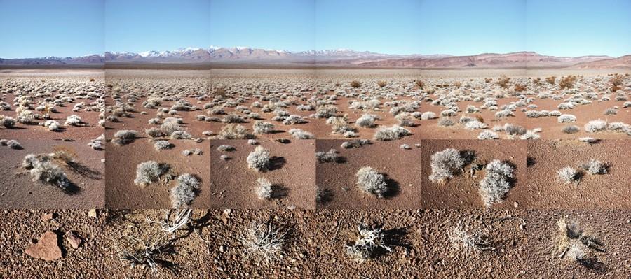 Sarcobatus Flat, Nevada