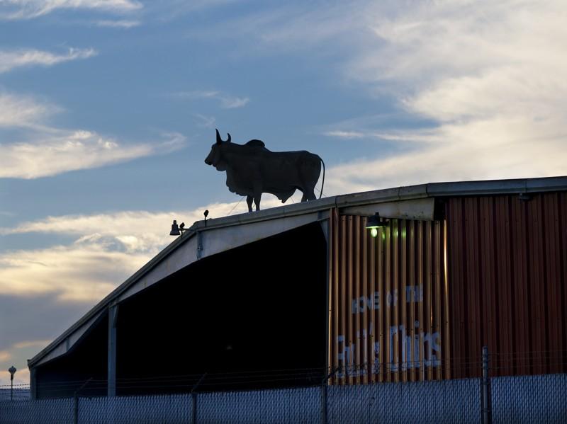 Bull in Silhouette