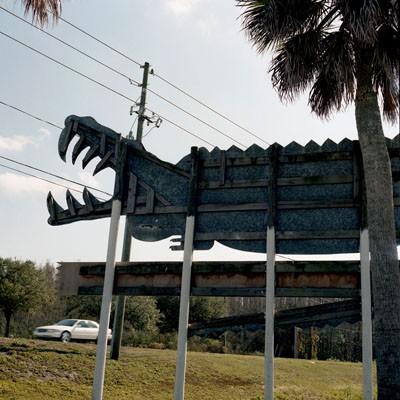 Gator Florida Highway 17