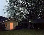 Backyard at Dusk, Austin, TX
