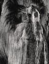 Lightning Struck Tree #2, 1987