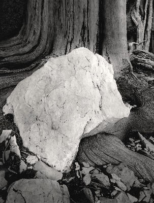 White Stone, Deep in the Forest, 1988