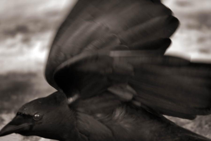 On a Dark Wing #5