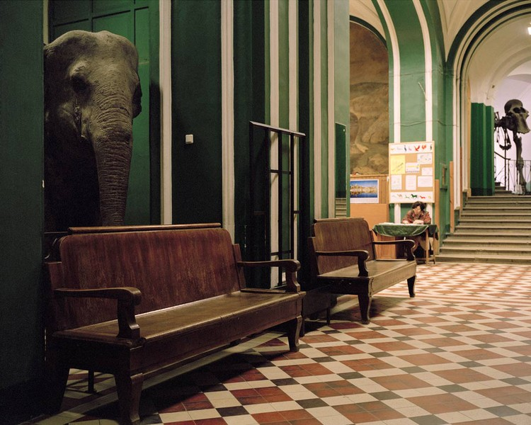 Elephants, Zoological Museum of Moscow University