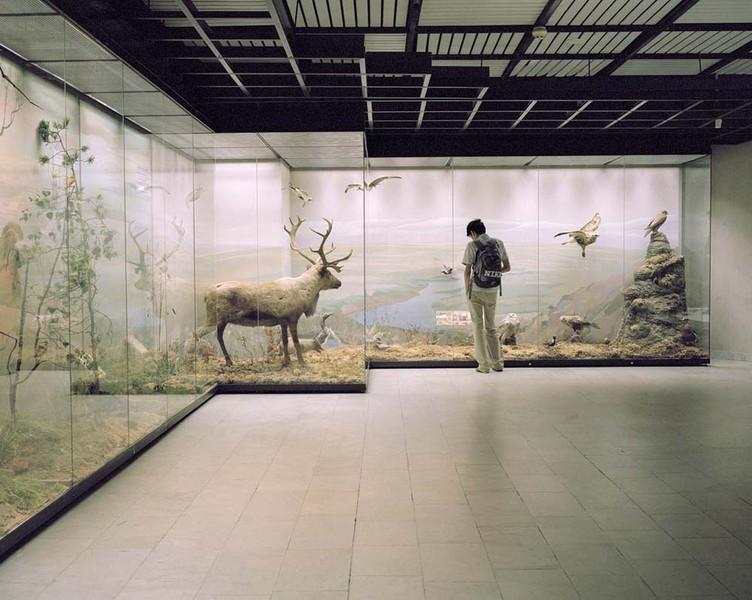 Nike,  State Darwin Museum.
