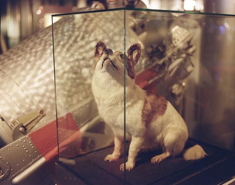 Space Dog, Memorial Museum of Cosmonautics