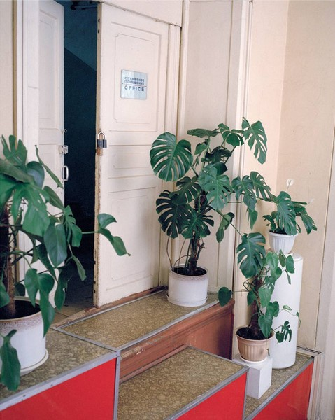 Potted Plants, Polytechical Museum