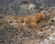 Fire-Ravaged Ruins, Gamla, Israel