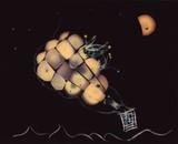 Fungi Luminogram 6 - Balloon