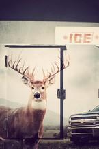 Hanksville, UT