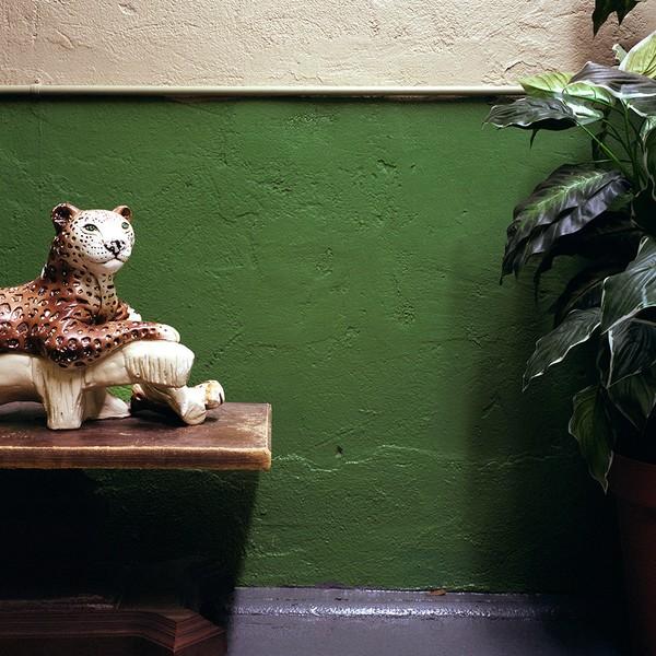 untitled 67 (jaguar)