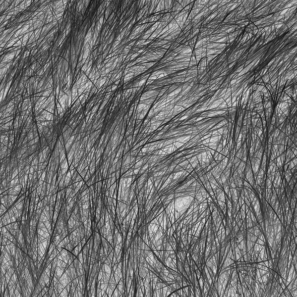 Grass Tracks 41. 2016.