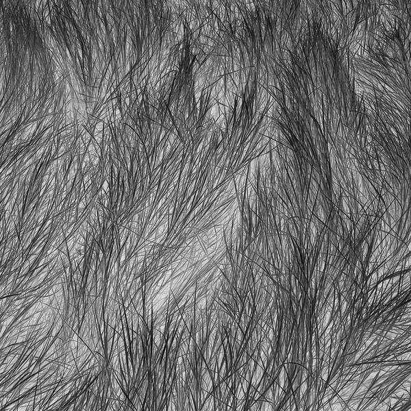 Grass Tracks 10, 2011.