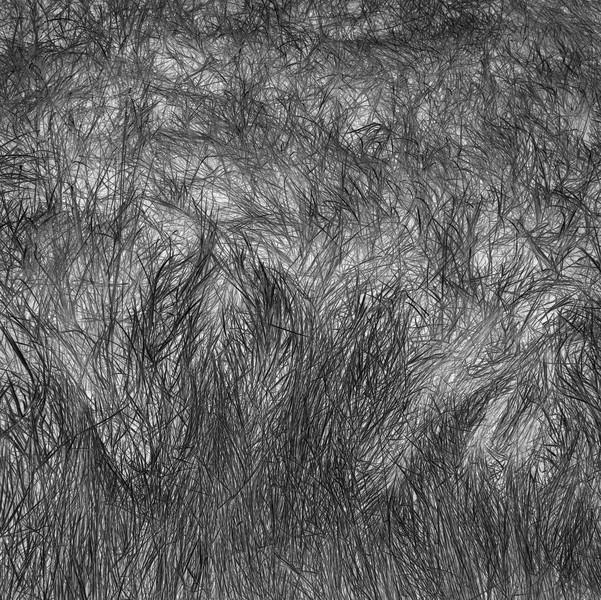 Grass Tracks 4, 2011.
