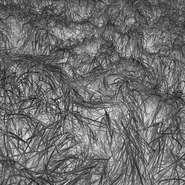 Grass Tracks 7, 2016.