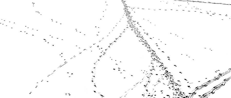 Snow Tracks 5, 2011.
